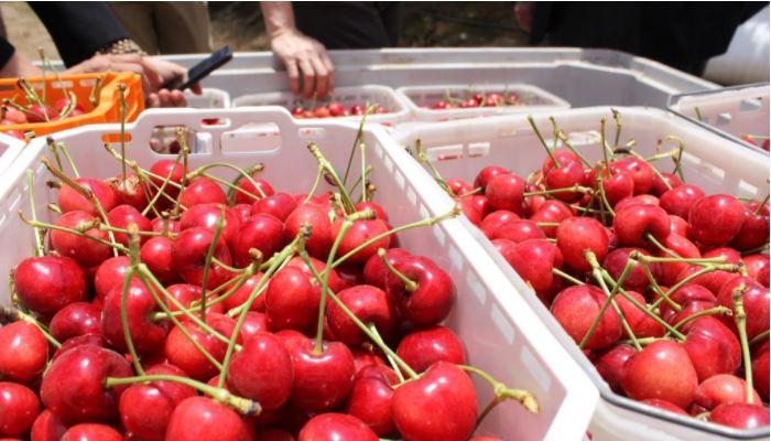 Chile: Fedefruta plantea inquietud por eventuales confinamientos durante peak de cosechas frutícolas.