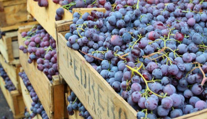 Envíos de uva peruana a EE.UU. ininterrumpidos por protestas de trabajadores agrícolas