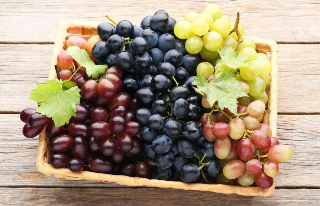 Chile: Prevén disminución del 19,3% en envíos de uva de mesa en campaña 2020/21
